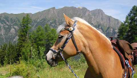 Guided half-day trail rides in Pfitschtal