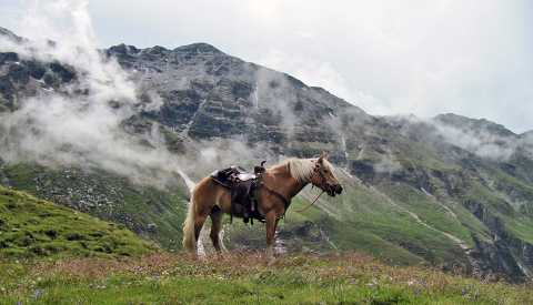 Riding experiences in the South Tyrolean Alps